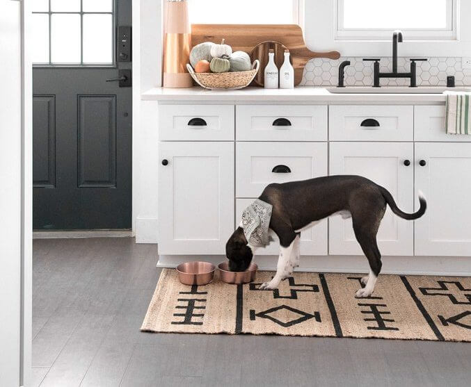 Pet friendly floor | Andy's 5 Star Flooring